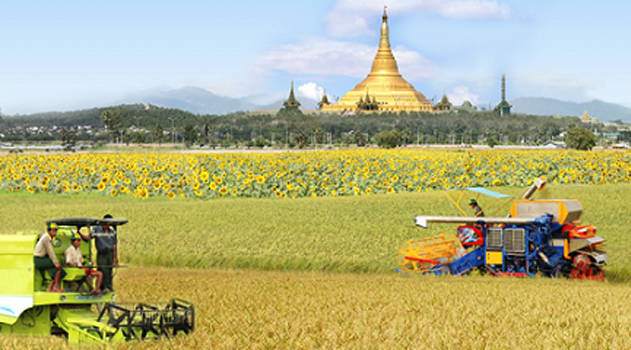 agricultural field in Myanmar with golden temple in the background
