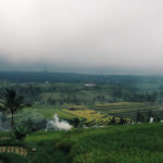 Rice fields on a foggy day