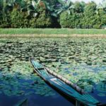 Boat in a lotus pond and trees in daytime
