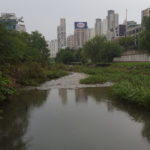 tall buildings of a city in the background, a river and trees in the foreground.
